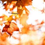 Rückschnitt im Herbst